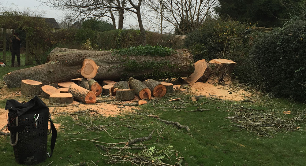 Ask Tree Removal Caterham Surrey