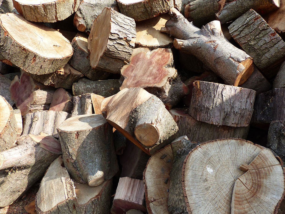 Logs in wood pile