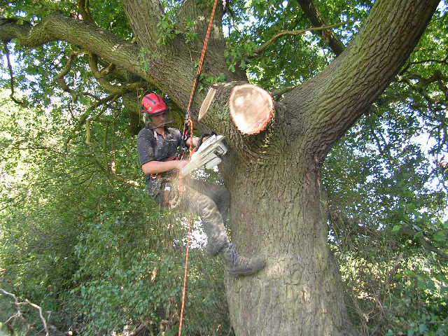 Tree Crown Lifting in Bookham to allow more light