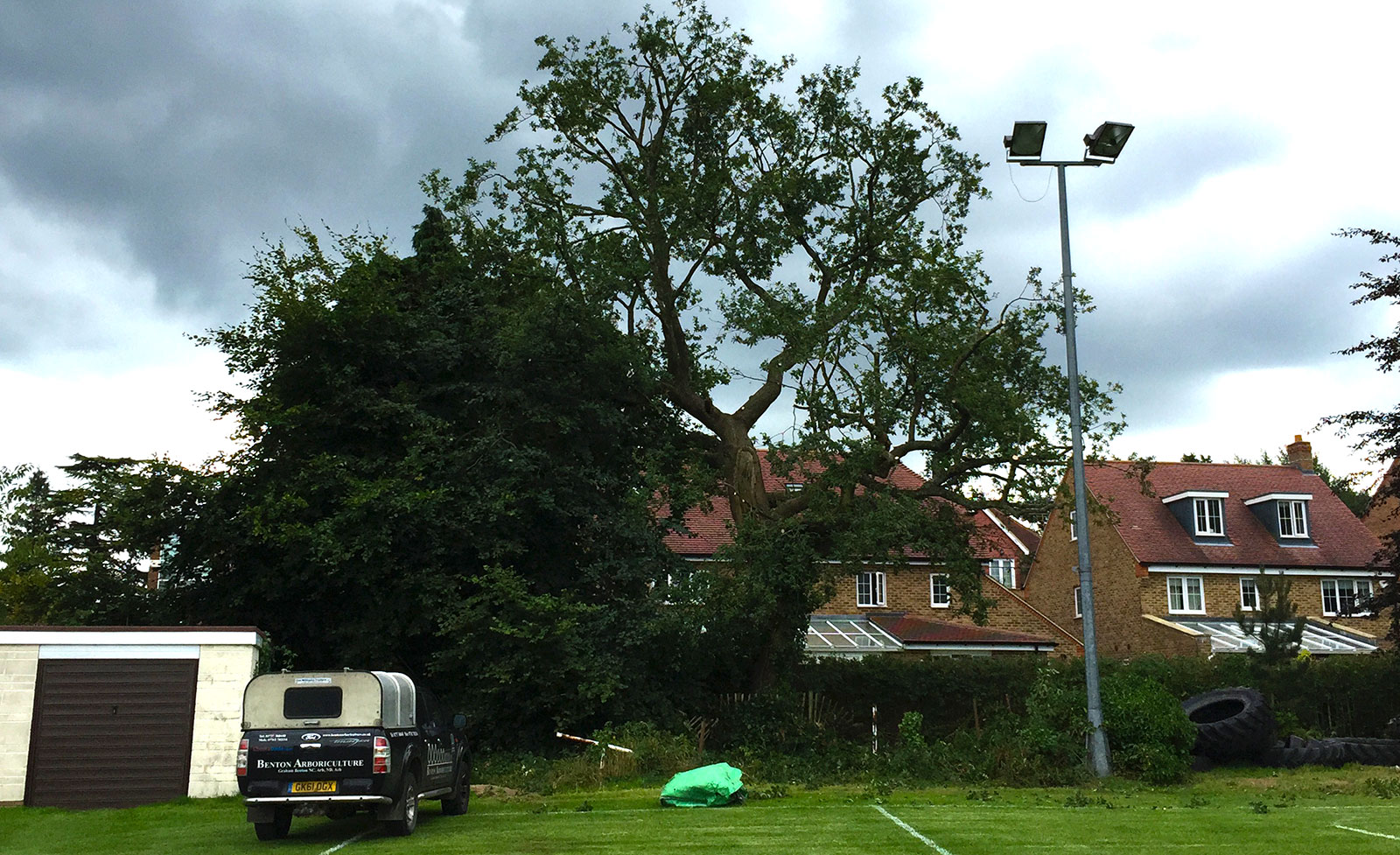 Crown Reduction and thinning of Oak tree in Caterham, Surrey