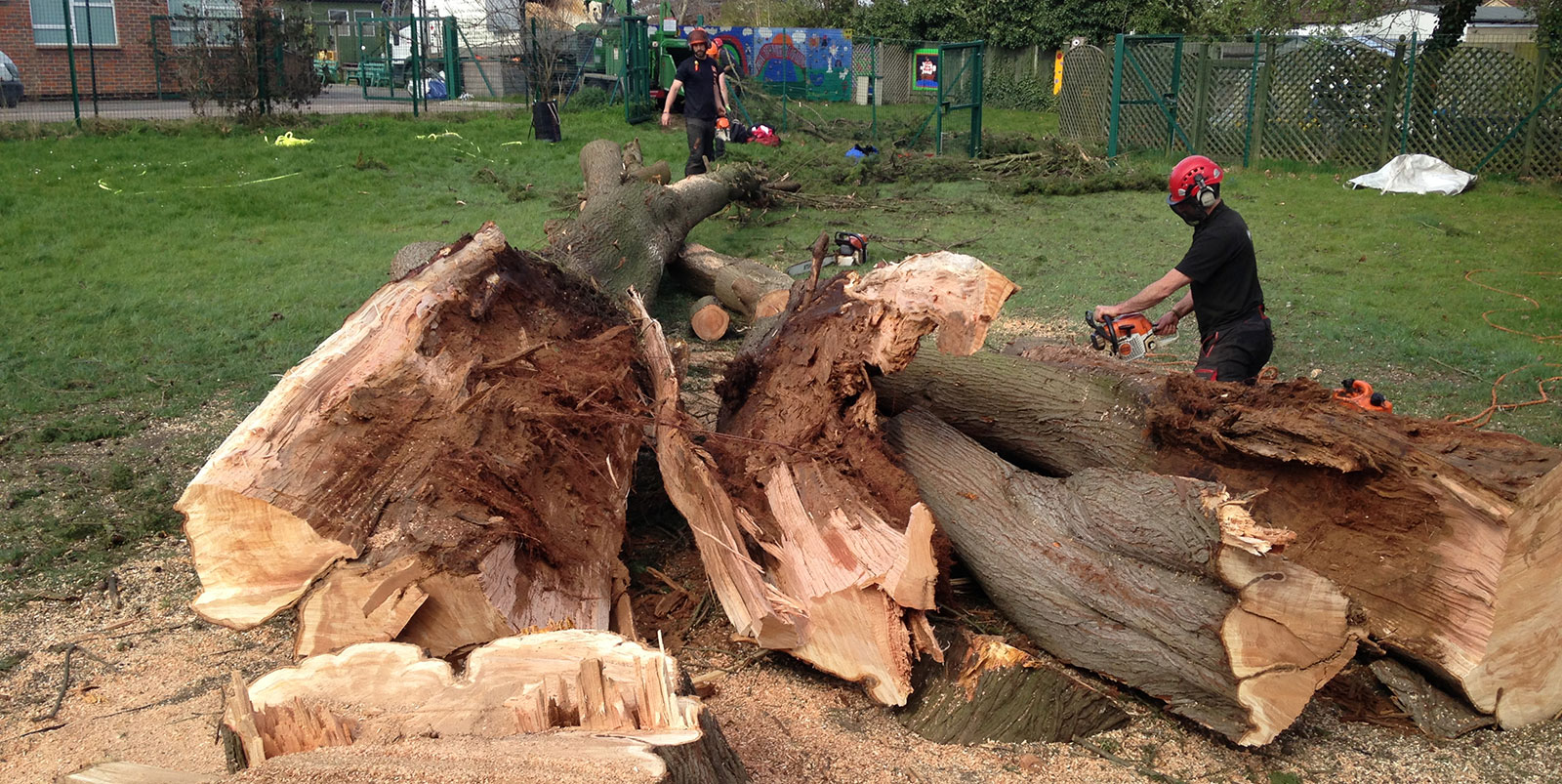 Storm damaged tree felling and removal